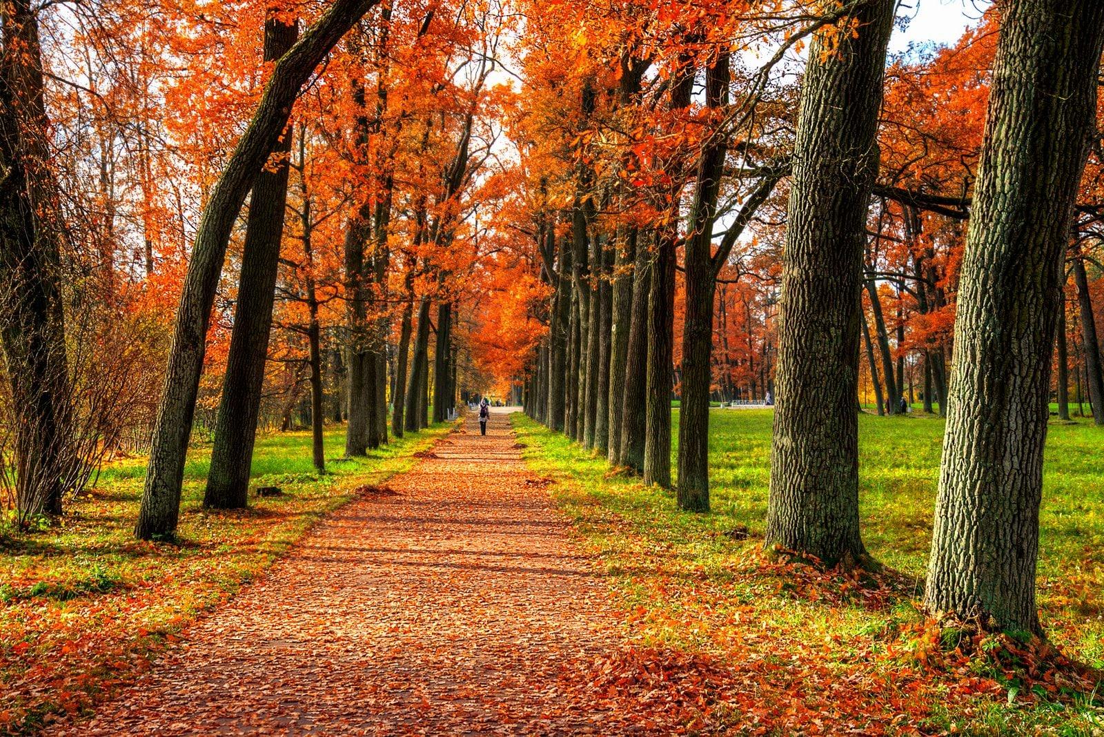 du lịch Nga mùa thu 3