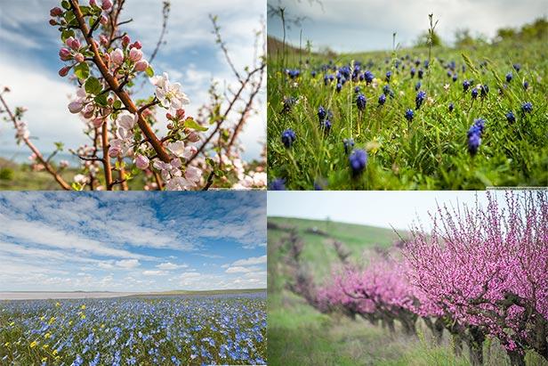 du lịch Nga mùa xuân 2